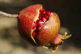 pomegranate-185456__180
